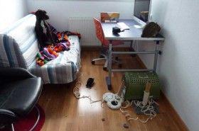 Los problemas psicológicos del perro, síntomas y soluciones