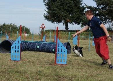 agility perros santiago