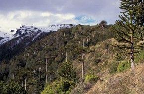 Los 18 mejores bosques del mundo  EROSKI CONSUMER
