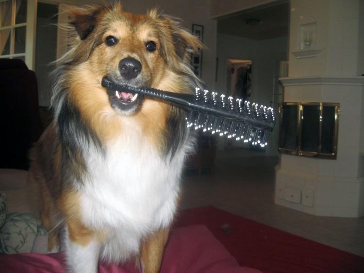 Caída de pelo en perros, ¿cuáles son las causas?