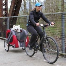 Tres Formas De Llevar Al Perro En La Bicicleta Eroski