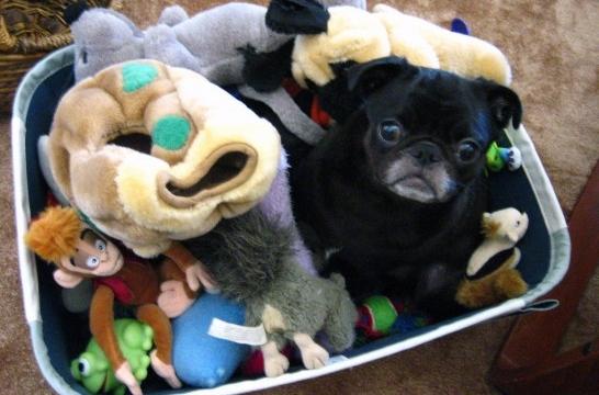 Seis Juegos Para Estimular Al Cachorro De Perro En Casa Eroski