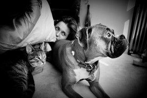 ¿Perro o gato? El animal preferido revela nuestra personalidad