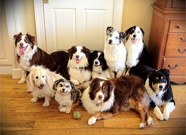 Perro aburrido - Perro bostezando Perros en la puerta