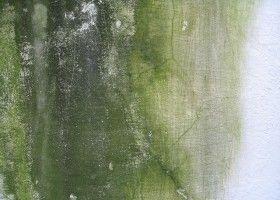 C mo quitar la humedad de una pared antes de pintarla - Como eliminar la humedad de la pared ...
