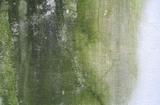 C mo quitar la humedad de una pared antes de pintarla - Como quitar humedad ...