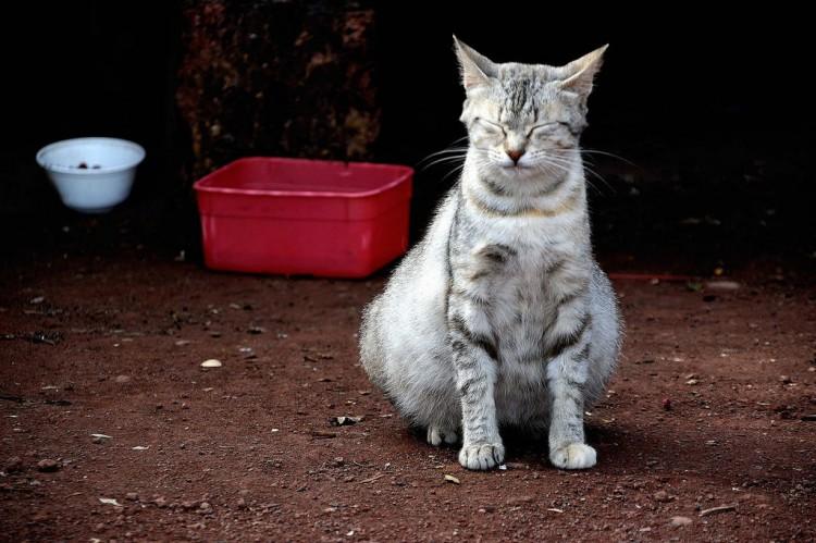 e0592b28f ... cachorro de gato. Imagen  Feliciano Guimarães