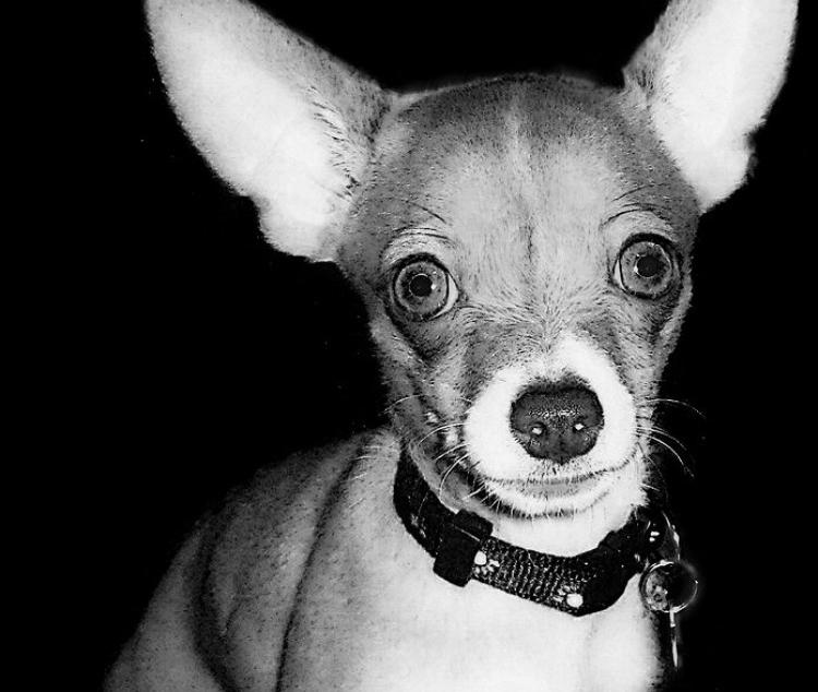 Perros fobia a los ruidos