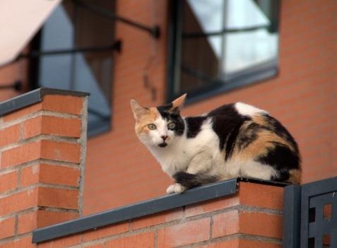 C mo evitar denuncias vecinales por molestias del gato for Como evitar los gatos en el jardin