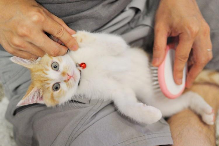 Cortar gatos pelo