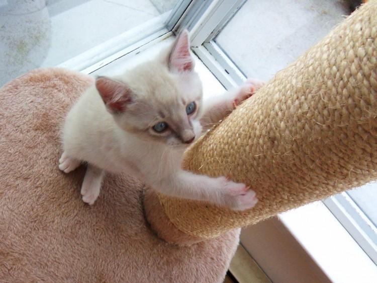 13 Rascadores Para Gatos Caseros Y Gratis Eroski Consumer