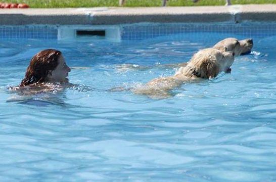 A la piscina amigos perros el ba o canino m s solidario for Piscinas eroski