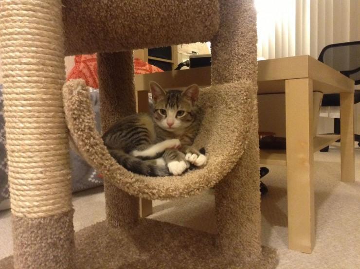 13 rascadores para gatos caseros y gratis eroski consumer - Casas para gatos de madera ...