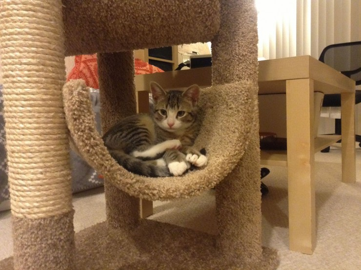 13 rascadores para gatos caseros y gratis eroski consumer for Muebles para gatos ikea