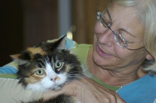 ¿Mi gato tiene alzhéimer? 5 claves para descubrirlo