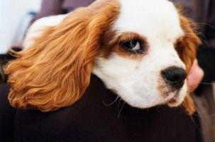 Qué Sabes De Tu Perro Cinco Aplicaciones Sobre Canes Para