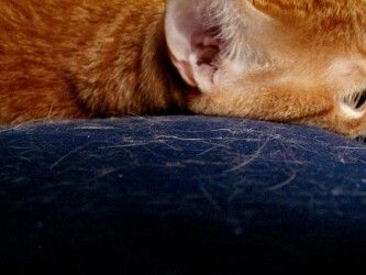 Eliminar los pelos de gato de la ropa siete trucos - Como quitar los pelos de gato de la ropa ...
