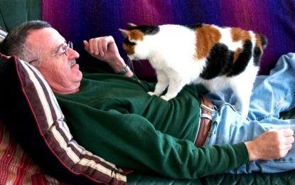 Ternura e inteligencia animal Gatos-amasan-por-que-art