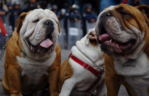 ¿Por qué los jadean los perros?