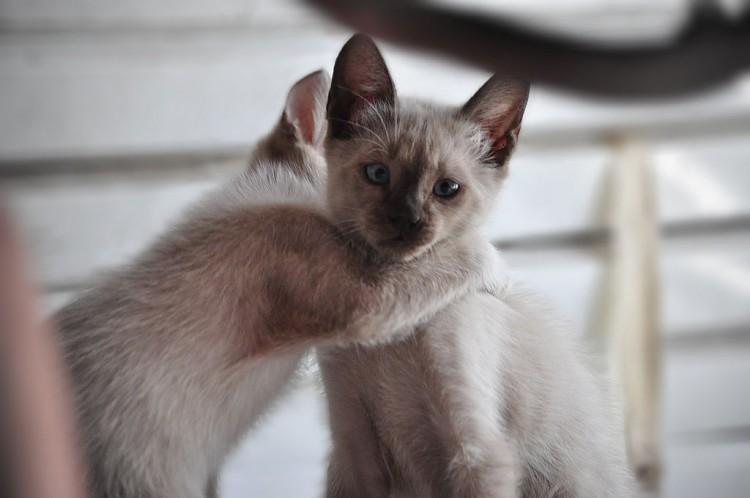 Gatos en casa