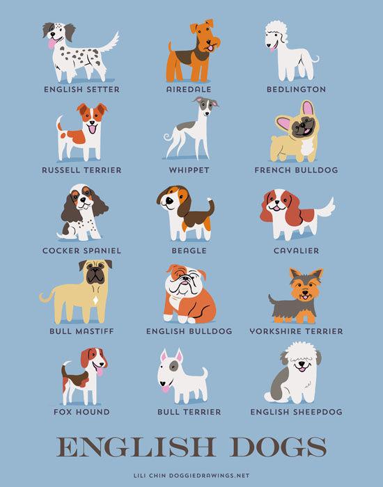 Cuántas Razas De Perros Existen El Mejor Amigo Del Hombre