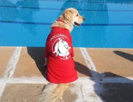 Un d a en la piscina con mi perro eroski consumer for Piscinas desmontables eroski