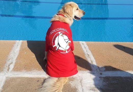 Un d a en la piscina con mi perro eroski consumer for Piscinas hinchables eroski