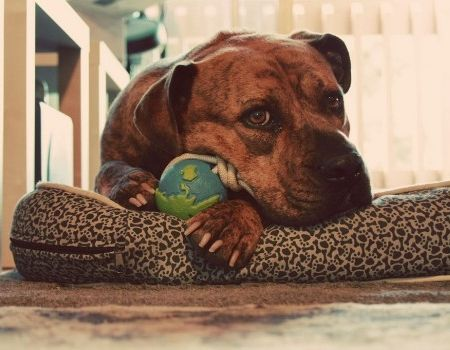 Perros que hay en el mundo