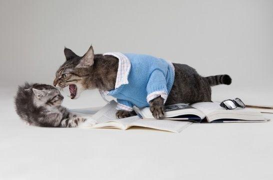Cinco cosas que estresan a tu gato, y que tal vez no sabías | EROSKI ...