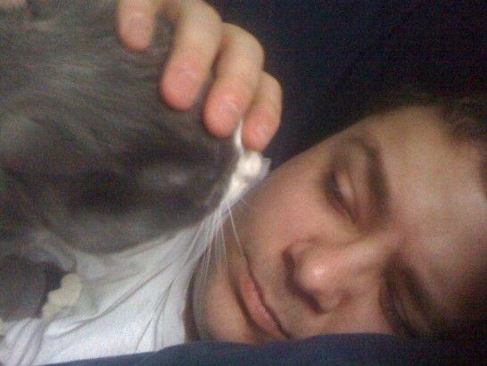 Gato dormir de noche