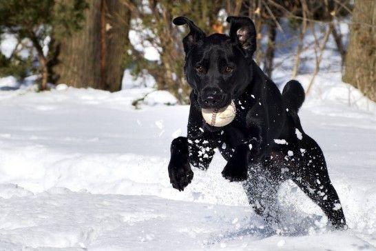 Perro con pelota