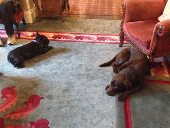 Hoteles para perros España