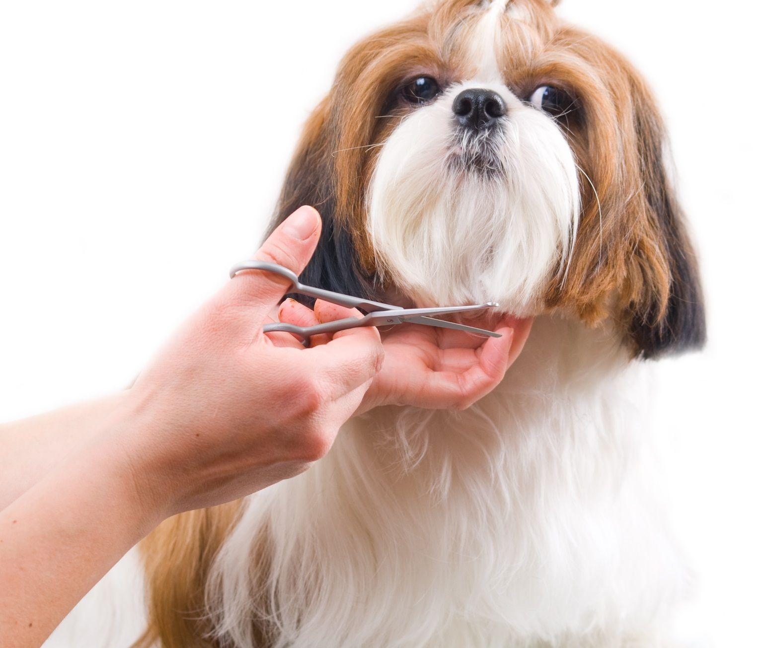Cortar pelo perros