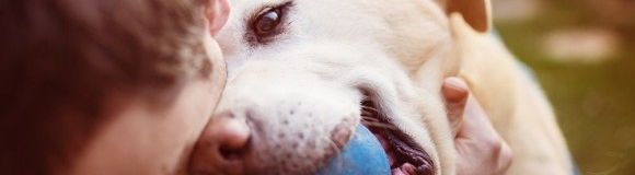 Día Mundial del Perro: ¡13 formas de celebrarlo!