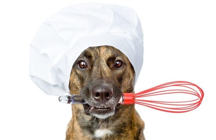Cocina Casera Para Perros Cinco Recetas R Pidas