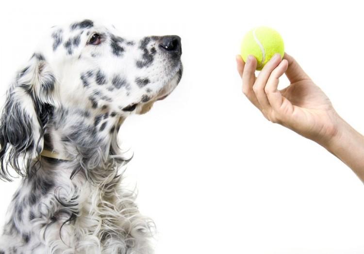 13 juguetes para perros hechos en casa, ¡gratis! | EROSKI CONSUMER