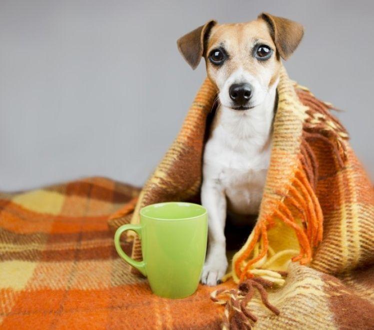 La gripe en perros, ¿cómo cuidarles? | EROSKI CONSUMER
