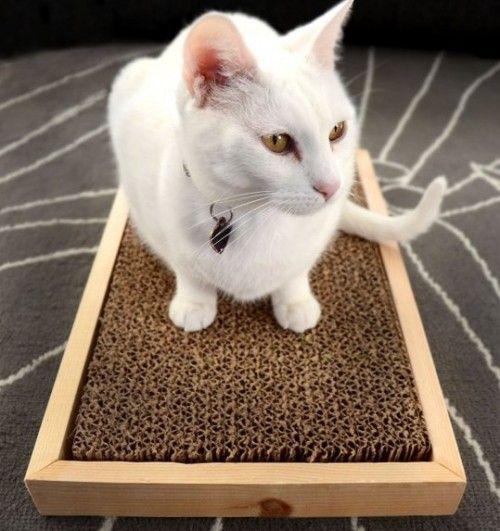 Rascador con caja de cartón
