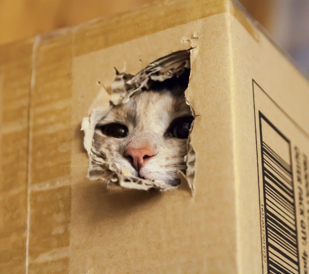 C mo hacer un rascador para gatos con cart n eroski - Fotos de casas para gatos ...
