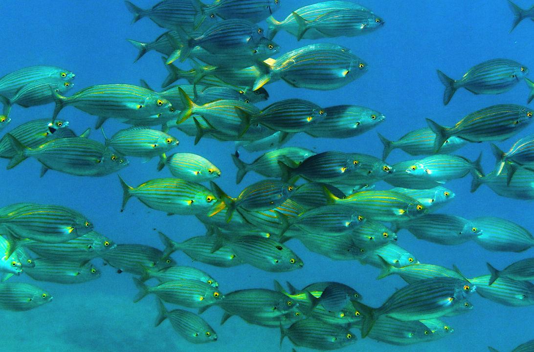 Piscina m s profunda del mundo peces lesbos for Piscinas eroski