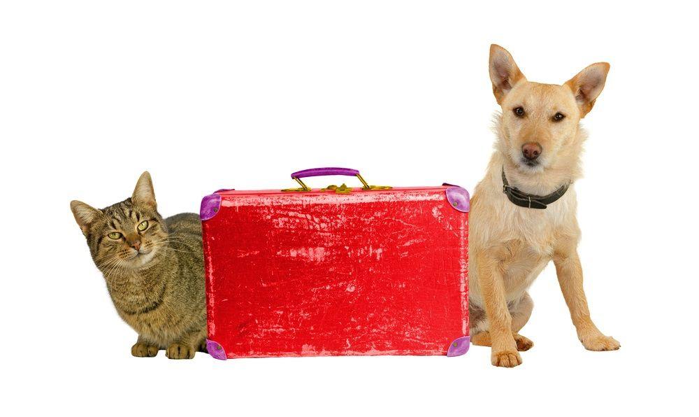 Viajes animales infomascota