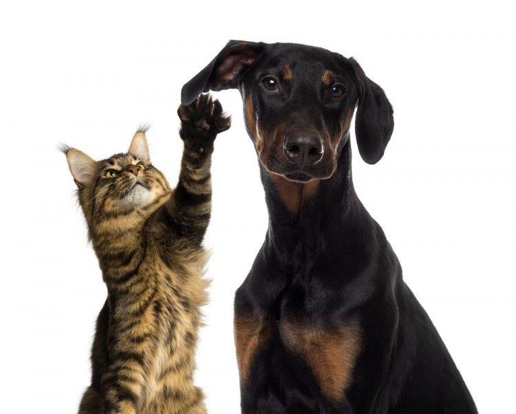 Resultado de imagen de perro y gato infomascota