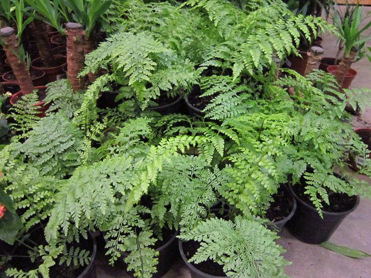 C mo utilizar plantas para purificar el aire de casa - Plantas de interior que purifican el aire ...