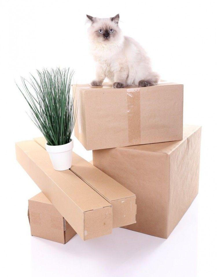 Once torres para gatos que puedes hacer en casa eroski - Material de gimnasio para casa ...