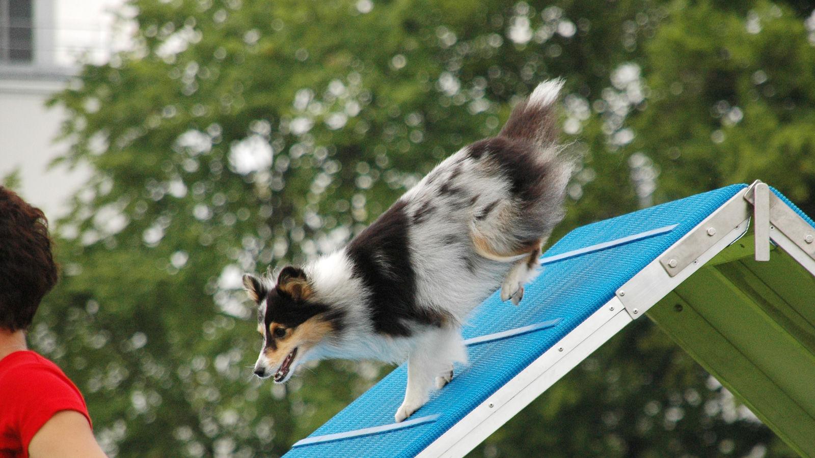 Seis deportes con tu perro: ¿cuál elegir?