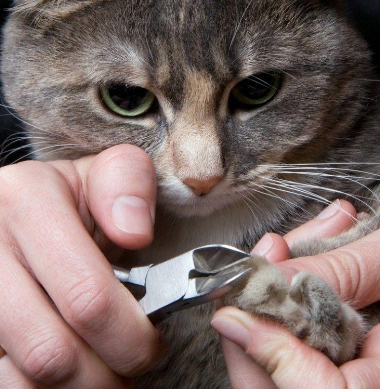Corte de uñas en gatos