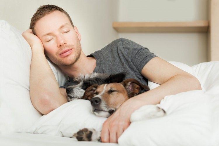 Cómo gatos y perros ayudan a dormir mejor