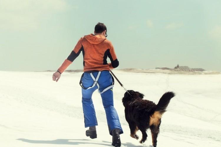 7 consejos para pasear con tu perro este invierno