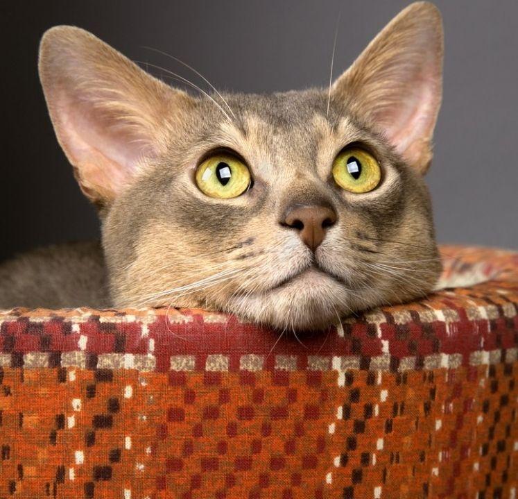 8 camas para gatos hechas en casa ¡gratis! | EROSKI CONSUMER
