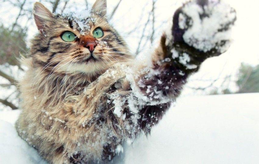 Perros y gatos que adoran el invierno, ¡en fotos!